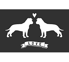 American Staffordshire Terriers in Love Photographic Print