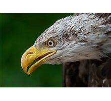 Bald Eagle Profile Photographic Print