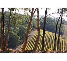 Autumn Vineyard  Photographic Print