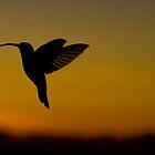 Hummingbird in flight by robinmoore
