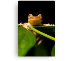 treefrog in Bahia, Brazil Canvas Print