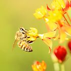 Bee on Milkweed by gregAllore