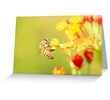 Bee on Milkweed Greeting Card