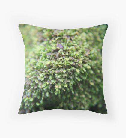 Lichen in National Orchid Garden, Singapore Throw Pillow