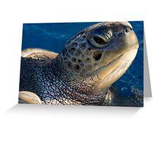 Green turtle, Chelonia mydas, in Bahia Greeting Card
