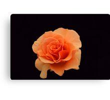 Just Peachy Canvas Print