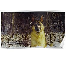 Goliath Snow Face (For sale) Poster