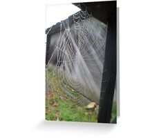So The Spider Caught The Fly Greeting Card