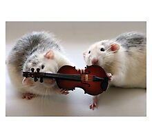 Playing the violin together :) Photographic Print