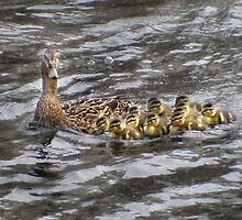 Mother and her twelve by Corinne Noon