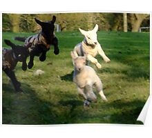 Leaping Lambs Poster
