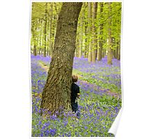 Boy in the Bluebell Wood Poster