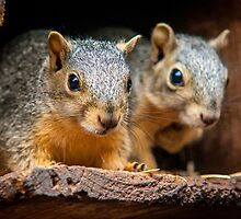 Got Any Nuts? by Jim Felder