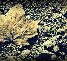 [lone leaf] by bathtubjunkie75
