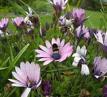 Flower and Bee by ©FoxfireGallery / FloorOne Photography