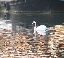 Swan and Boat on Aire by Cleburnus