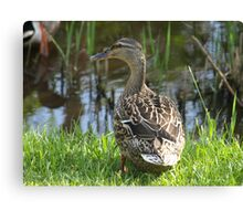 Mama Duck Canvas Print