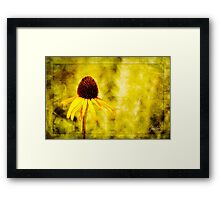 Yellow Coneflower - Oklahoma City Zoo - 2011 Framed Print