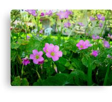 Front Yard Clover Flowers Canvas Print