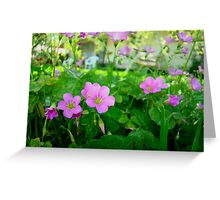 Front Yard Clover Flowers Greeting Card