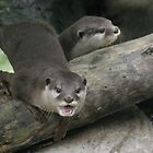 Otters by eapdesigns