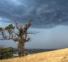 Summer Storms by Sally Bruning