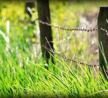 spring grass by Jean Poulton
