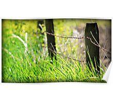 spring grass Poster