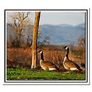 Wild Geese by Nikki Collier