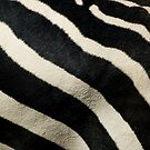 Zebra Pattern by Jim Felder
