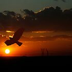 Bird Silhouette At Sun Set In The Free State, South Africa by Qnita