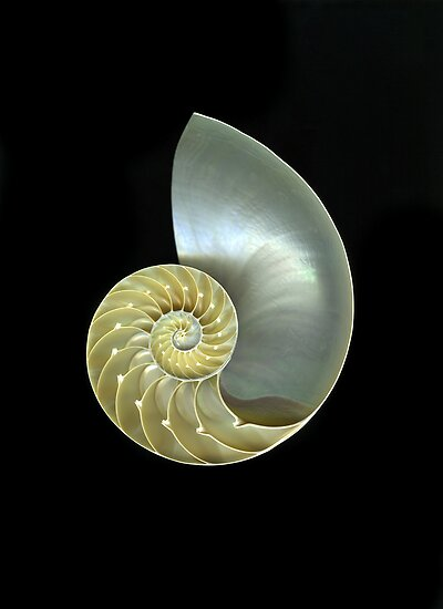 Nautilus by Christian Slanec   FineArt Studio