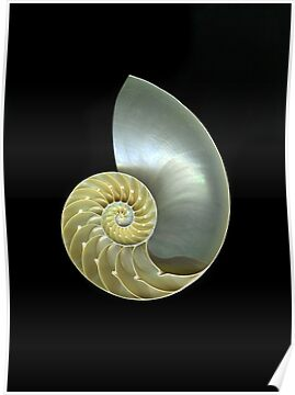 Nautilus by Christian Slanec   FineArt Studio