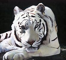 White Tiger by Rhiannon Mowat