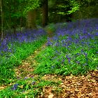 Path through the Bluebell Wood by Alan E Taylor