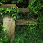 Forgotten Stile by Alan E Taylor
