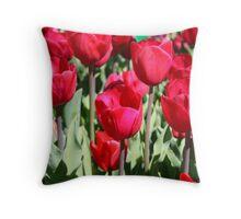 Tulips at Floriade, Canberra, AUSTRALIA Throw Pillow