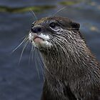 Whiskers by Robyn Carter