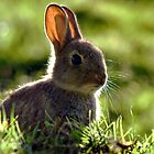 Young Rabbit by Peter Bland