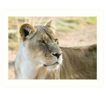 Lioness on alert Art Print