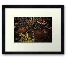 Into the Undergrowth Framed Print