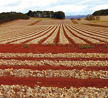 Onion Fields by play4ful