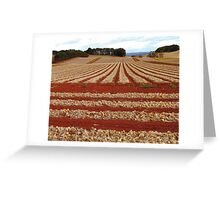 Onion Fields Greeting Card