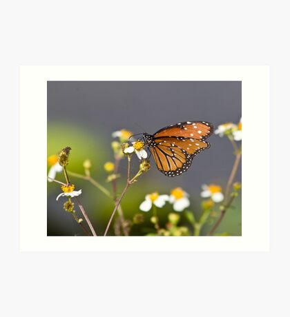 Everglades Butterfly Art Print