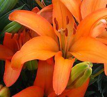 Orange Lilies by Michele Caporaso