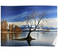 Wanaka Lake Tree 2 Poster