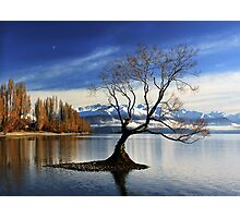Wanaka Lake Tree 2 Photographic Print