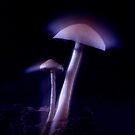 Magical Mushrooms by Zuzana D Photography