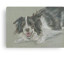 Collie dog pastel portrait Canvas Print