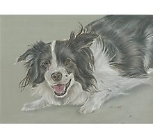 Collie dog pastel portrait Photographic Print